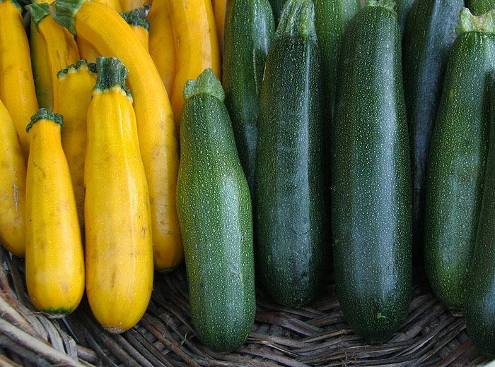 Courgette & courges