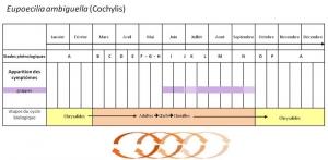cochylis_10