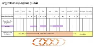 Eulia1