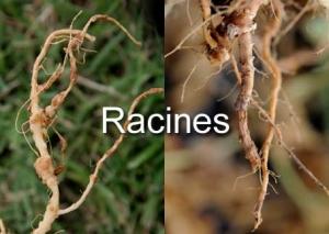 Racine de Diagnostic par l'image-3-1