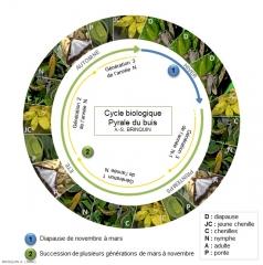 Cycle de vie PB 3