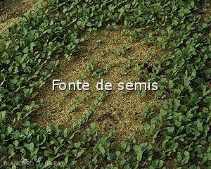 Diagnostic-Fonte2