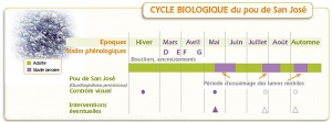 Prunier_Cycle-pou-san-jose<i>Diaspidiotus perniciosus<i>