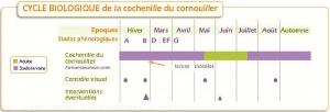 Prunier_Cycle-cochenille-cornouiller <i>Parthenolecanium cornii>
