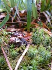 escargots photo 700 520
