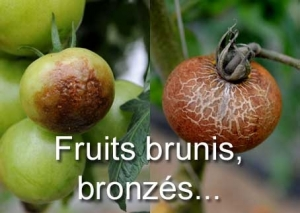 Fruits Brunis