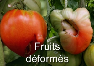 Fruits déformés