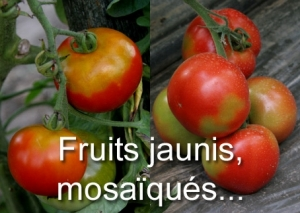 Fruits jaunis