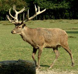 Grands mammifères