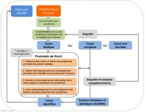 Figure-Etiologie