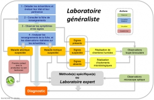 Figure-Labo-generaliste2