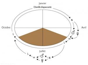 cycle-cydia-pomonella-Carpo(memPFI)